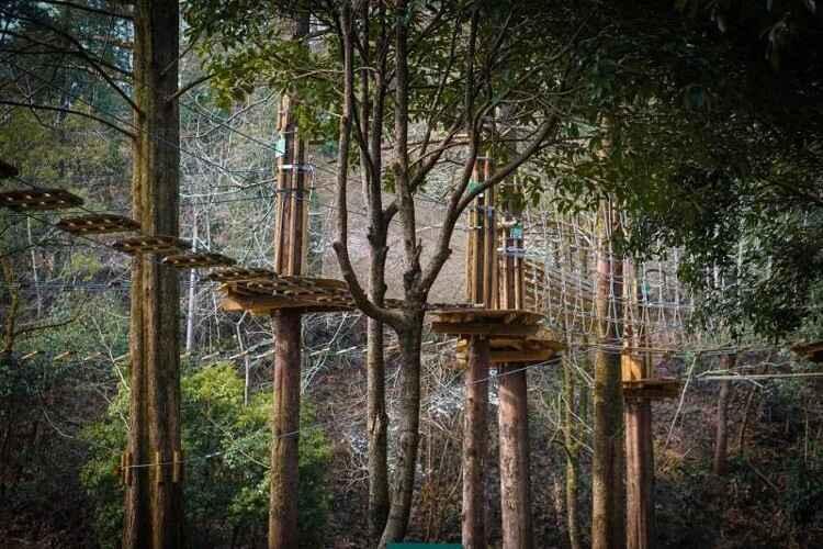考拉丛林.jpg