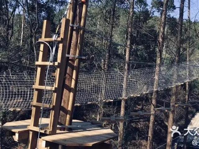 口袋屋探险乐园项目——考拉丛林
