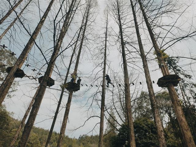 口袋屋树上探险,丛林穿越怎么玩?